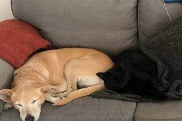 השכן ננשך על ידי אנג'לינה, כלבת השכנים עמה היה מיודד. פנייתו לקבלת טיפול רפואי הסתיימה בדרישתה של אנג'לינה להסגר