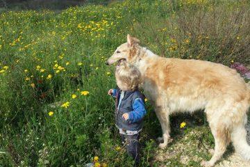 בעליה של מיה, כלבה עדינה ופחדנית, נדרשו להסגירה להסגר העירוני לאחר שנטען כי נשכה פעוטה