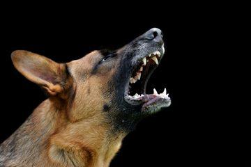 הרשות קבעה כי כלבך מסוכן