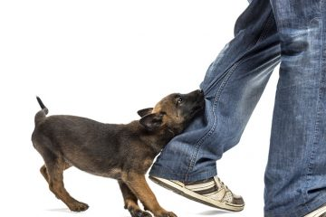 הכלב נשך או גרם לפגיעת גוף. מה עושים? – מורה נבוכים לנתבע בגין נשיכת כלבו