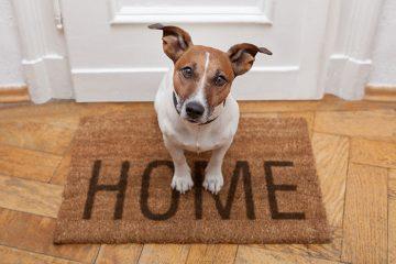 הדרך החוקית היחידה להשגת תצפית בית לכלב, לאחר שנשך.