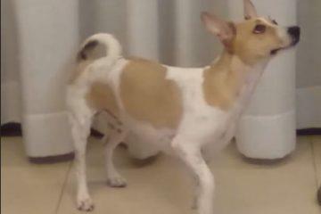 הניצחון של הכלבה אנג'י