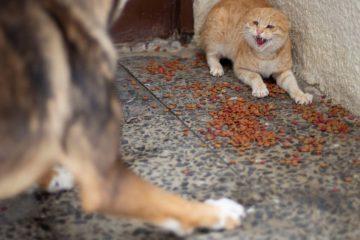 הכלב שהרג באכזריות מעל שלושים חתולים הוחרם סוף סוף מבעליו!