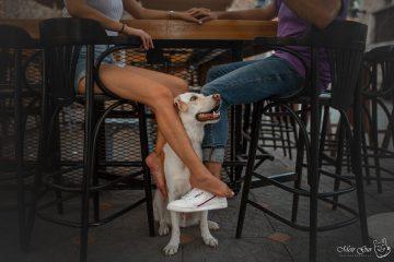 המדינה הסכימה לבטל כתב אישום שהגישה כנגד בעלים של כלב שנשך מלצרית בבית קפה