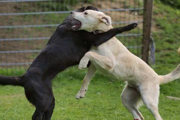 המדינה חזרה בה מכתב אישום כנגד בעלים של כלב שנטען לגביו שנשך, לאחר התערבות משרדינו