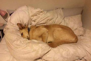 """חוו""""ד של וטרינר מוסמך להתנהגות כלבים, הציל את """"מארלי"""" מהסגר עירוני!"""