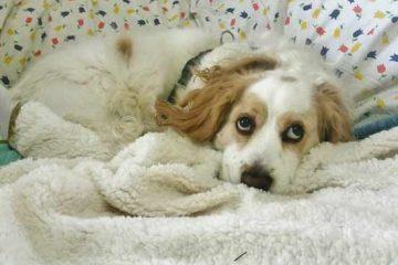 """מאמץ משפטי אינטנסיבי, זיכה את הכלב """"מאקי מסר"""" להסגר חלופי במרפאת הווטרינר הפרטי שלו!"""